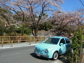 RIMG0117 桜