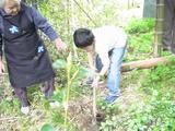 祖母の家7(タケノコ掘り)