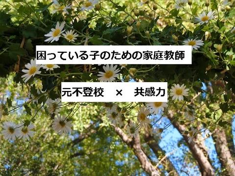 菊アーチ1表紙