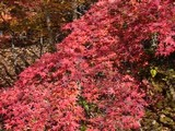 110307 雲場池紅葉