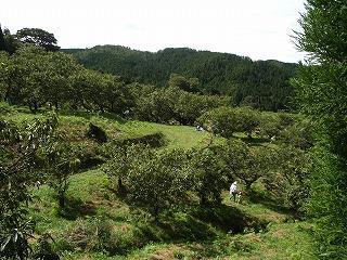 井出野栗園