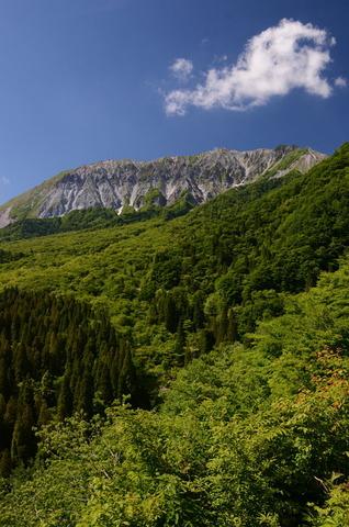 新緑の大山3