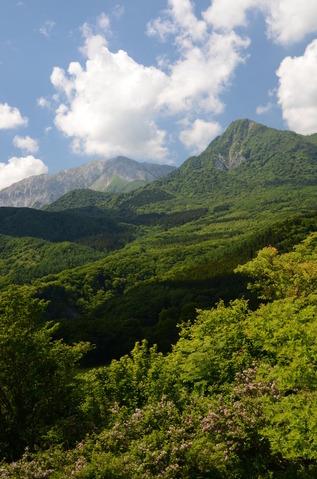 新緑の大山1