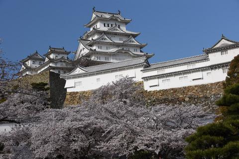 姫路城の桜8