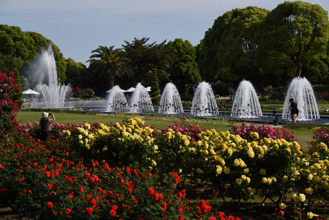 須磨離宮公園のバラ園18