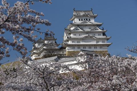 姫路城の桜9