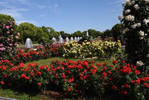 須磨離宮公園のバラ園2