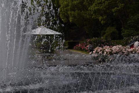 須磨離宮公園のバラ園10