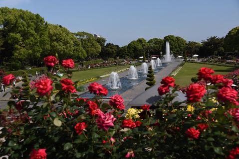 須磨離宮公園のバラ園1