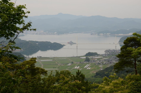 舞鶴自然文化園のアジサイ2