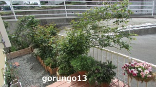 IMG_4379 (2)