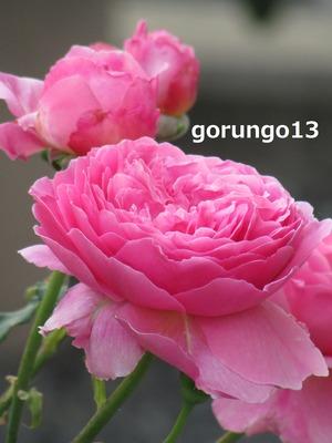 IMG_5596