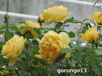 IMG_5122 (2)