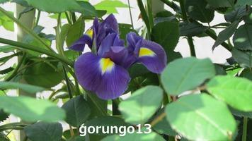 IMG_4457 (2)