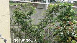 IMG_4380 (2)