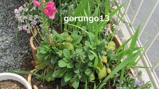 IMG_4412 (2)