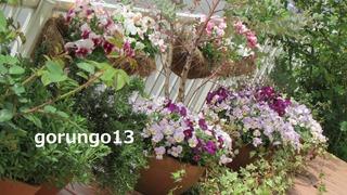 IMG_4386 (2)