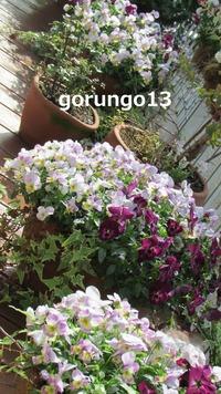 IMG_4458 (2)