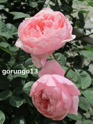 IMG_5556