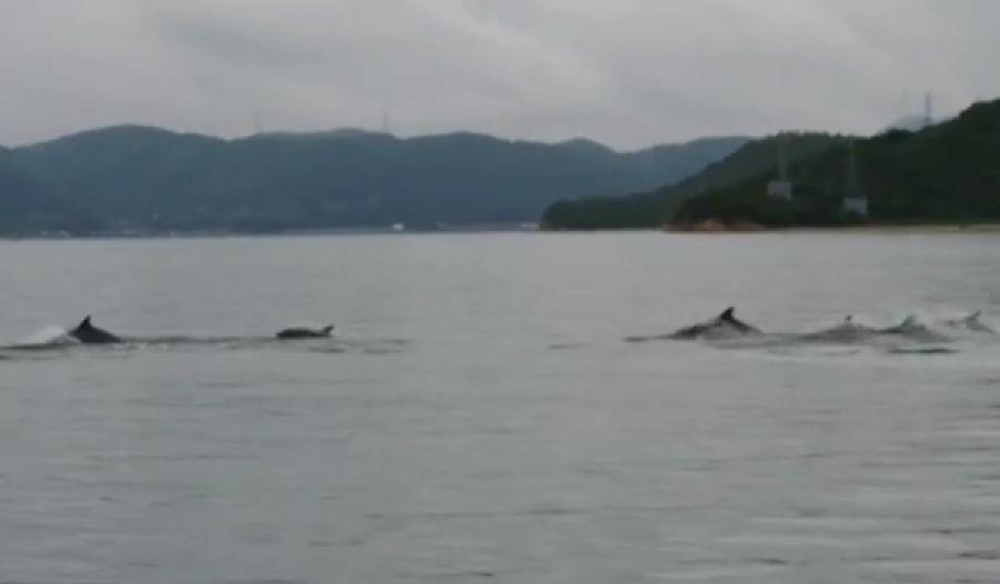 【宏観】茨城県内陸で地震連発+瀬戸内海にイルカの群れ+長野県で白虹