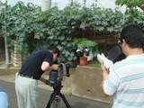 甲州のぶどう盆栽