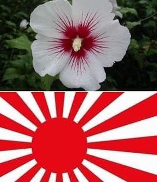 【アホ】韓国さん、自国の象徴花であるムクゲが旭日旗に見えてしまい発狂wwww