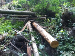 伐木1.jpg