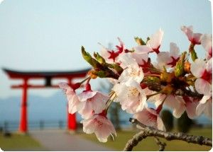桜(宮島SA)_.jpg
