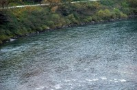 江の川.jpg