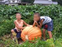 かぼちゃ.jpg