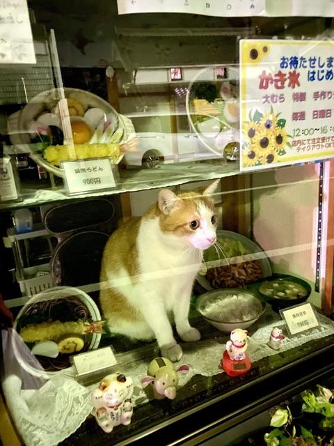 【画像】ネコ蕎麦っておまえら信じるか?