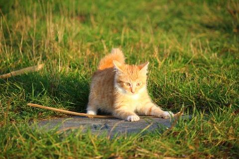 cat-1074784_1280