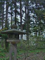 北海道神宮-桜 (11)