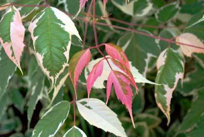 フラミンゴ2葉っぱ