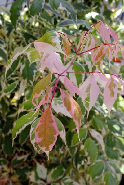 フラミンゴ葉っぱ