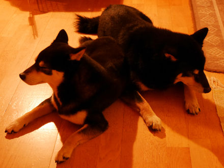 160825Tsuki&Koku