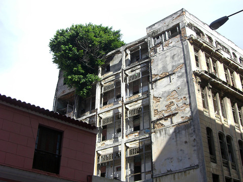 flower-tree-growing-concrete-pavement-115