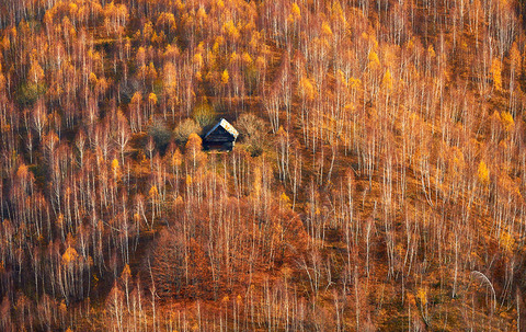 cozy-cabins-in-the-woods-009-57c589508ffb2__880