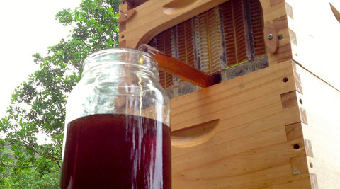 honey-on-tap-flow-hive-stuart-cedar-anderson-5