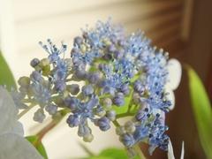 DSC05358_梅雨の花