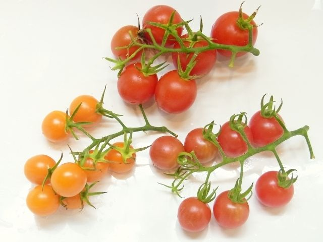 R0051466_ミニトマトの収穫_20120722