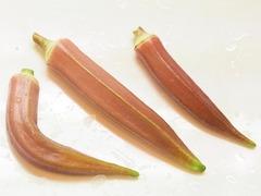 R0052149_赤オクラの実収穫_20120816