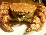 R0014950_北釧水産の毛蟹を茹で上げ