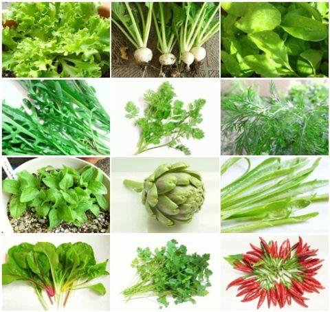 春から育てる家庭菜園野菜_20160429