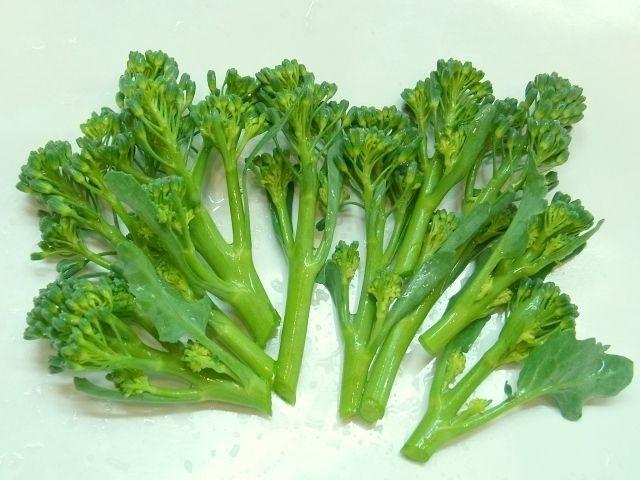 R0040335_ブロッコリー収穫_20110219