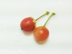 R0061168_赤くなり始めた一重庭桜の実を試しに収穫_20140615