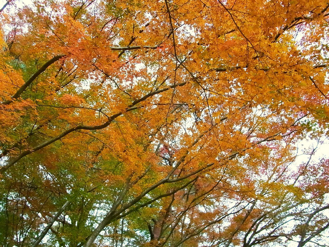 R0059149_修善寺自然公園_20131201