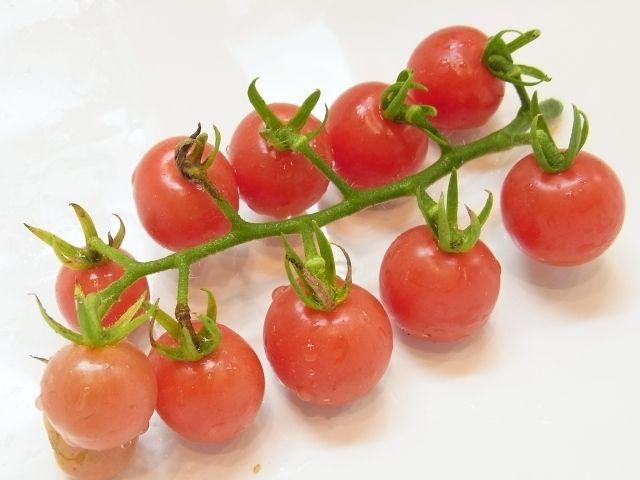 R0051249_ミニトマトプリンセスロゼの収穫_20120719
