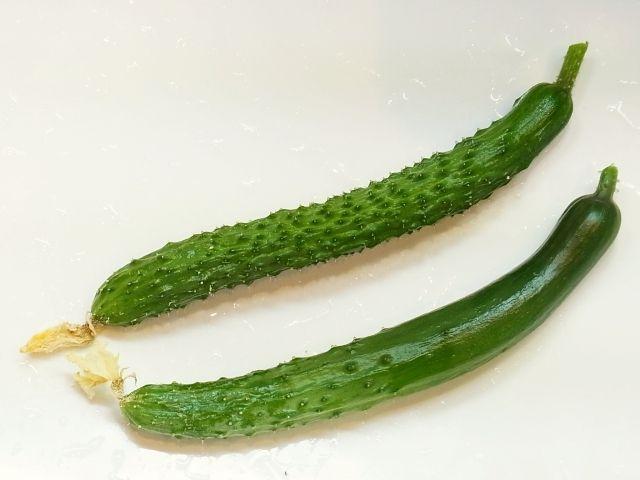 R0050633_台風前にミニキュウリを収穫_20120619