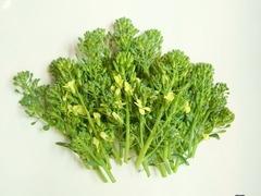 R0041420_ブロッコリー収穫_20110410